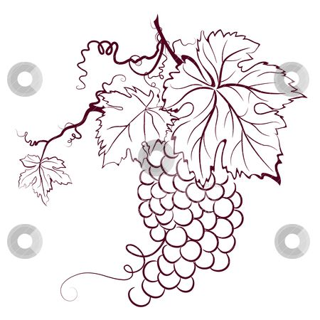450x450 Grape Vine Grape Vine Art Grape Vines, Patterns