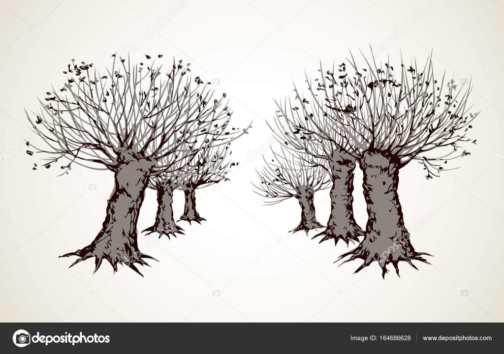 1024x720 Alley Of Leafless Trees. Vector Drawing Stock Vector Marinka