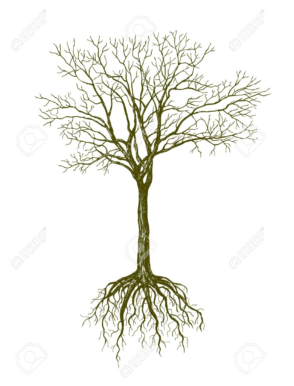 991x1300 Big Leafless Tree On White Background Royalty Free Cliparts