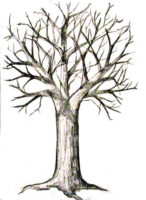 484x660 How To Draw A Tree