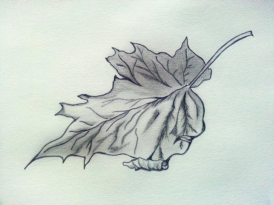 900x675 A Crumpled Leaf Drawing By Deepa Sahoo
