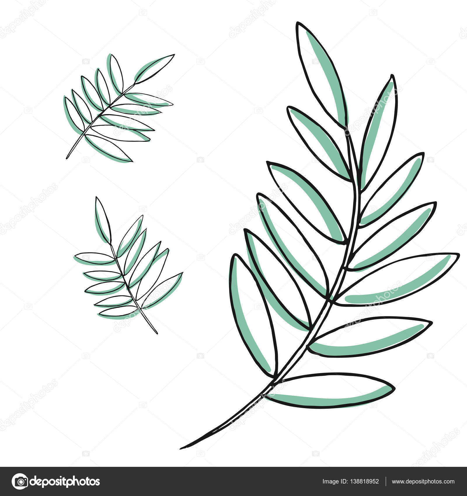 1600x1700 Leaf Vector Drawing Set. Isolated Palm Leaves. Herbal Engraved