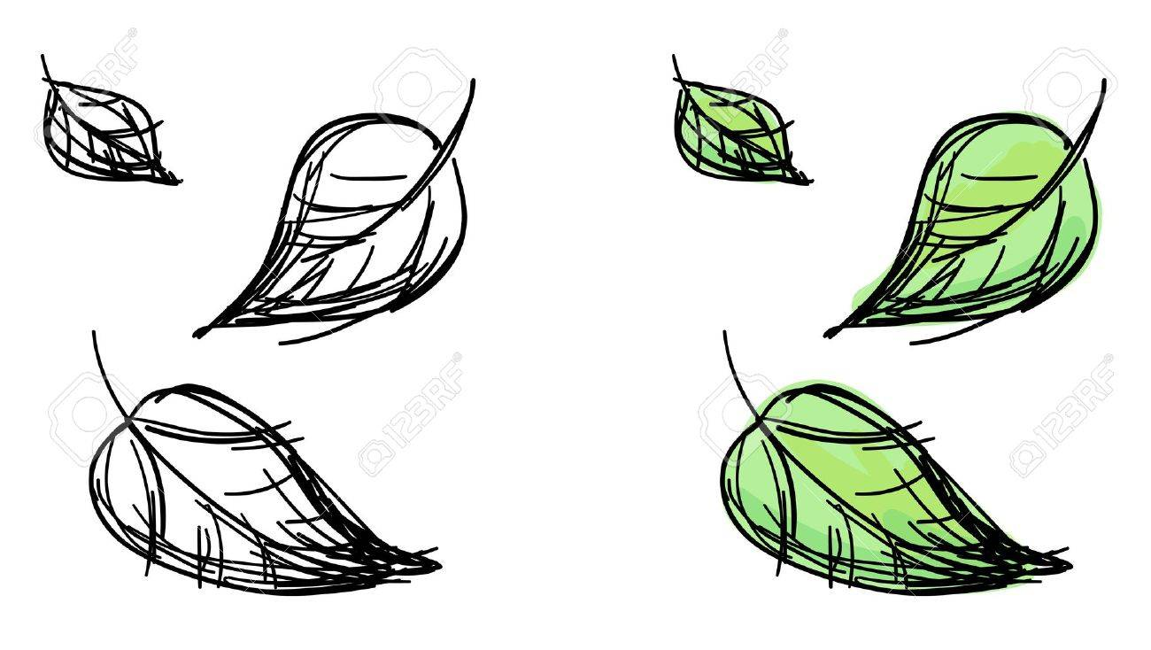 1300x734 Sketch Of Falling Leaves Black And White And Colorful Green