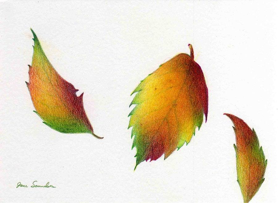 900x656 Three Leaves Drawing By Jane Samuelson