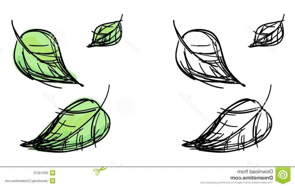 1024x649 Vector Sketch Falling Leaves Black White Colorful Green Variants