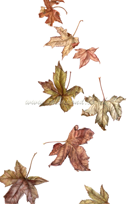450x691 Botanical Illustration Of Falling Autumn Leaves { Falling