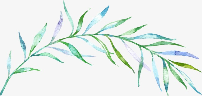 650x310 Drawing Branches, Green Leaves, Blue Leaves, Watercolor Leaves Png