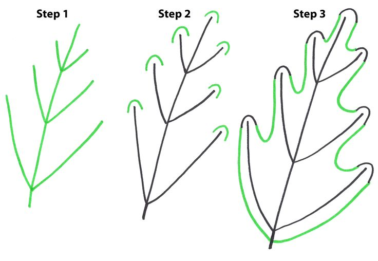 736x508 Image Result For Draw Leaves Steps You Rock!