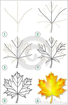 291x450 Page Shows How To Learn Step By Step To Draw A Maple Leaf. How