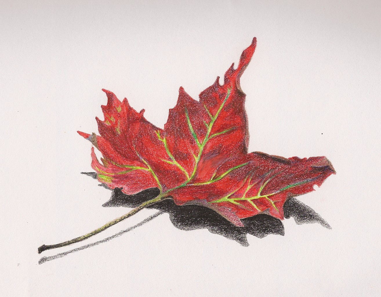 1314x1024 Pencil Drawing Of A Leaf Colored Pencil Drawings Of Leaves