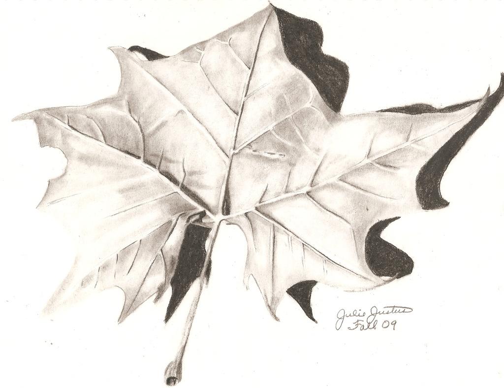 1024x788 Pencil Drawing Of A Leaf Leaf Drawing Pencil Drawing Mid West