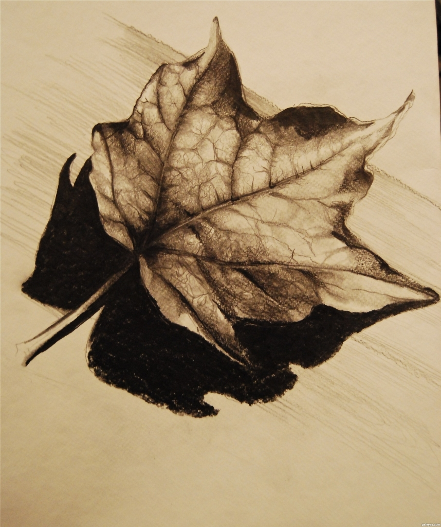 858x1024 Pencil Drawing Of Leaves Art Bailey Licensed For Non Commercial