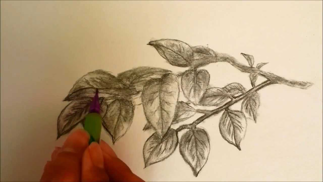 1280x720 Pencil Sketch Of Neem Leaf How To Draw Leaves