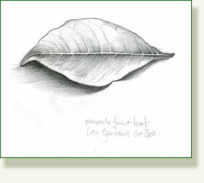 400x358 Pencil And Leaf October 2008