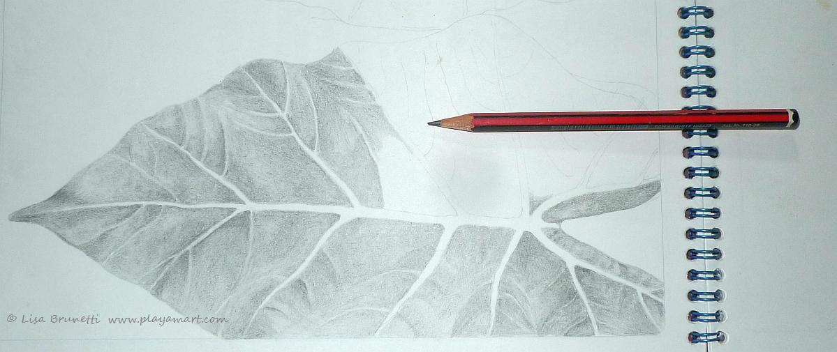 1199x505 Pencil Drawing Zeebra Designs Amp Destinations