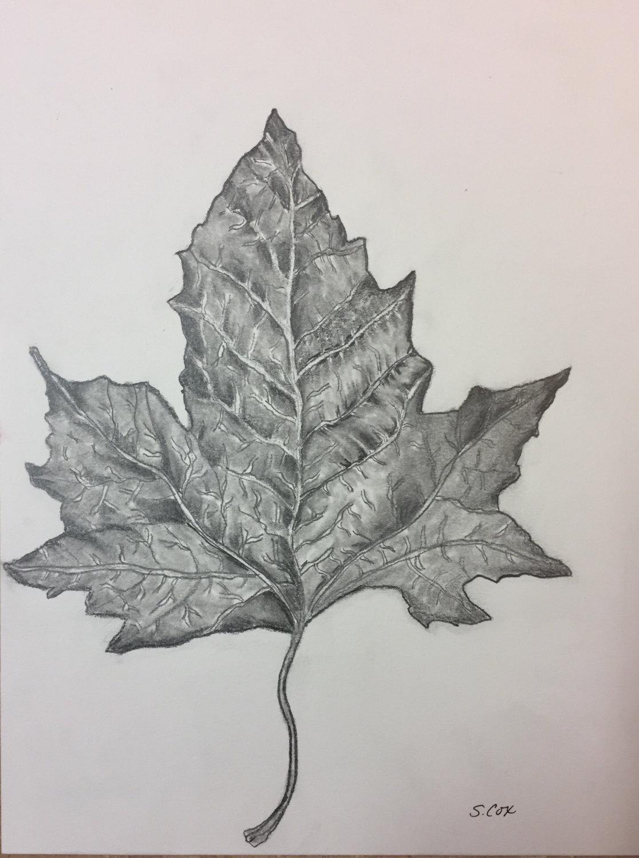 1116x1500 Pencil Sketch, Graphite Drawing, Fall Original Sketch, Nature