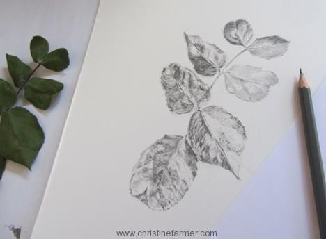 468x344 Rose Leaves In Ink Christine Farmer