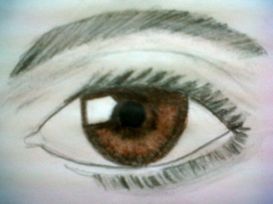 1032x774 Left Brown Eye Drawing By Rainbowrose725