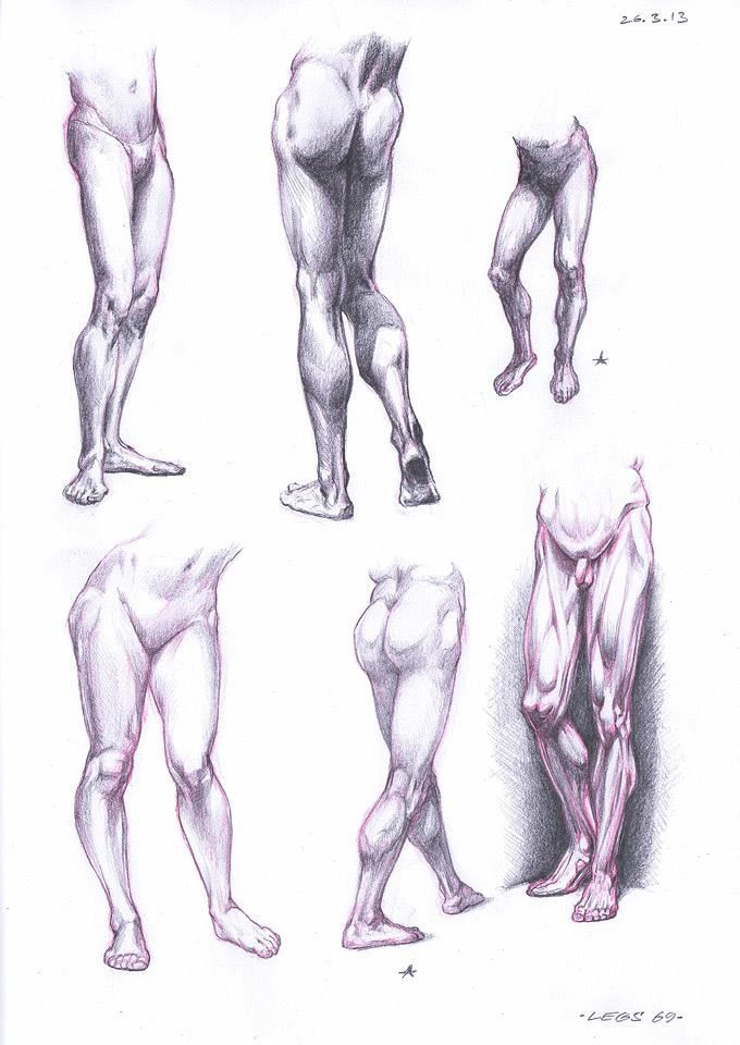Leg Anatomy Drawing at GetDrawings.com   Free for personal use Leg ...