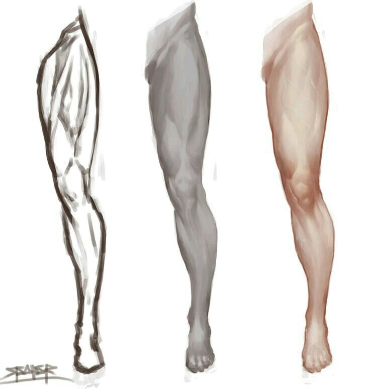 Leg Anatomy Drawing at GetDrawings.com | Free for personal use Leg ...