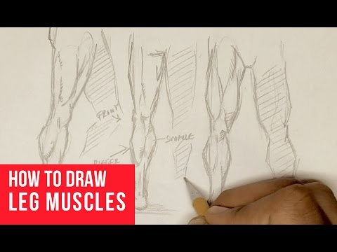 480x360 How To Draw Leg Muscles