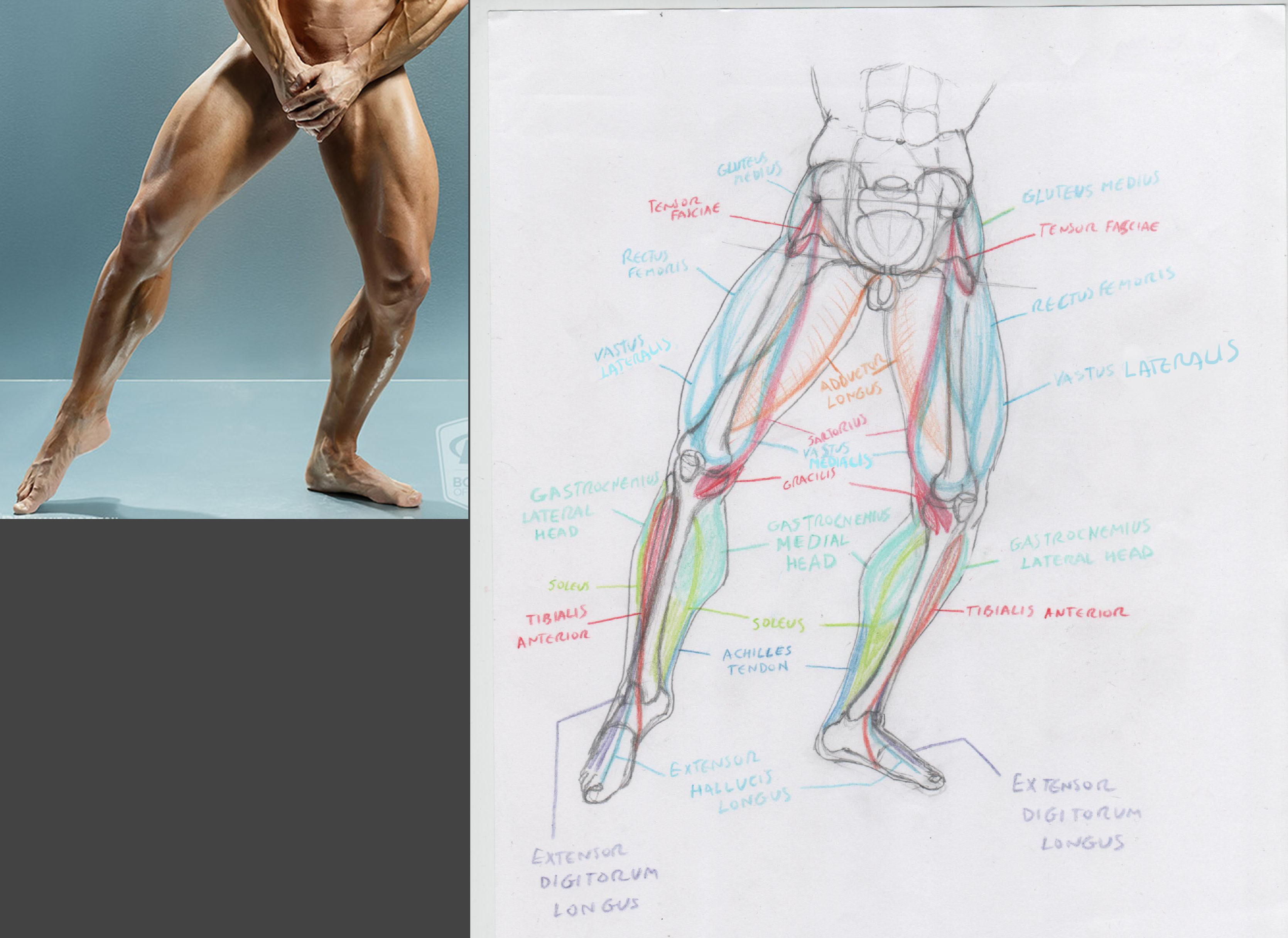It is a picture of Obsessed Muscle Leg Drawing
