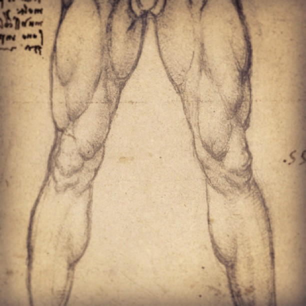 612x612 Leg Muscles Male Drawing Muscles, Drawing