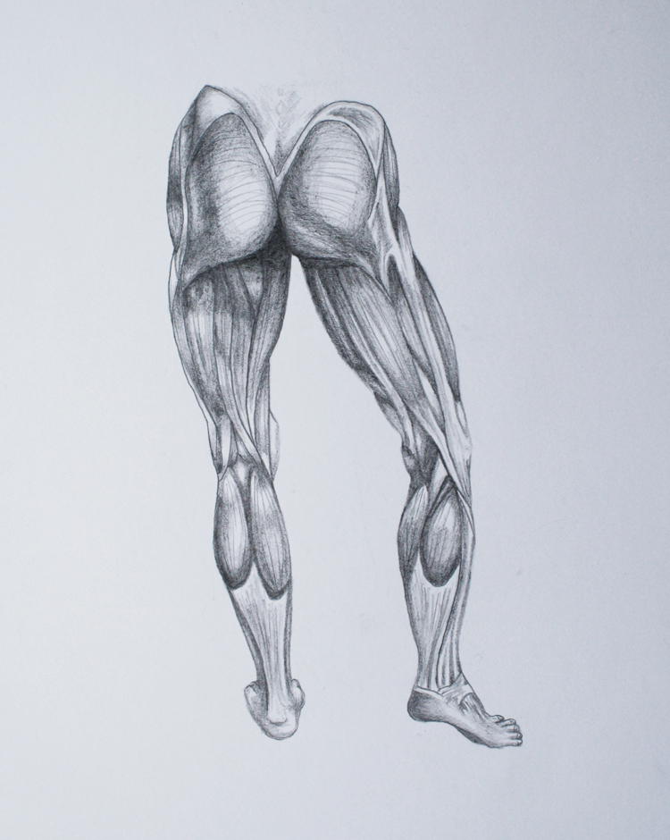 Leg Muscle Drawing at GetDrawings.com | Free for personal use Leg ...