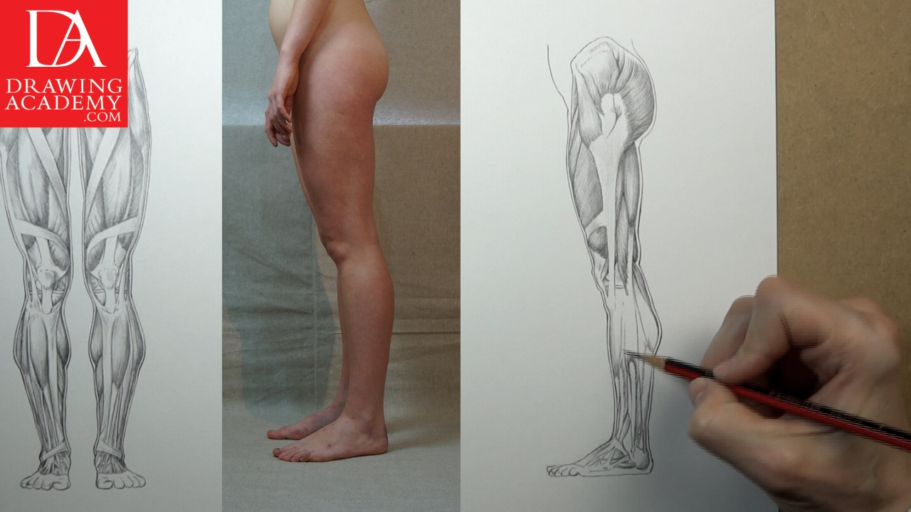 1280x720 Muscles Of The Leg