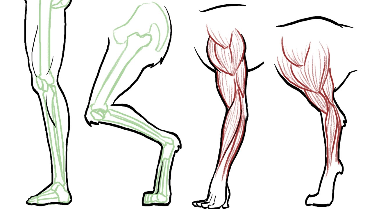 1280x720 How To Draw Animal Legs (Dogs, Cats, Horses, Bears Etc)