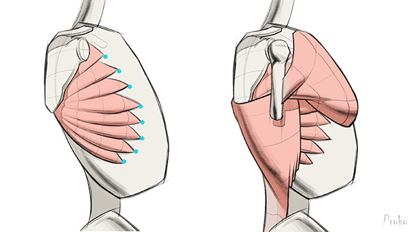 600x338 How To Draw Shoulder Muscles