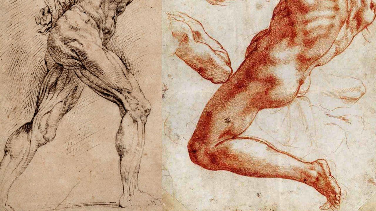 1280x720 Leg Muscle Anatomy