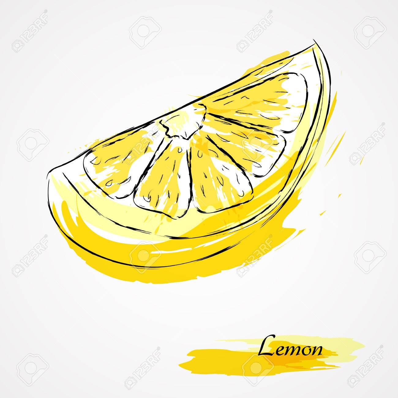 1300x1300 Hand Drawn Vector Lemon Slice, Piece, On Light Background Royalty