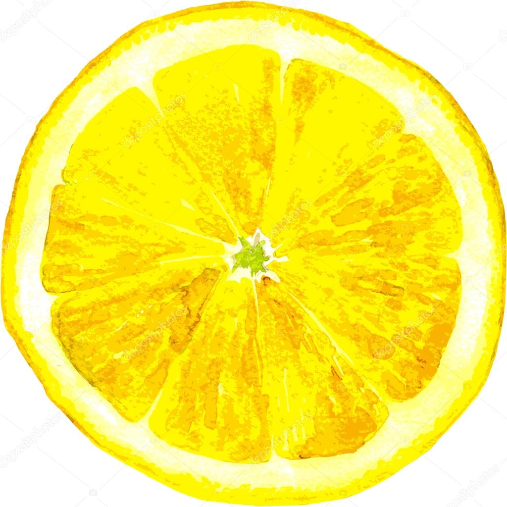 1024x1024 Slice Of Lemon Drawing By Watercolor Stock Vector