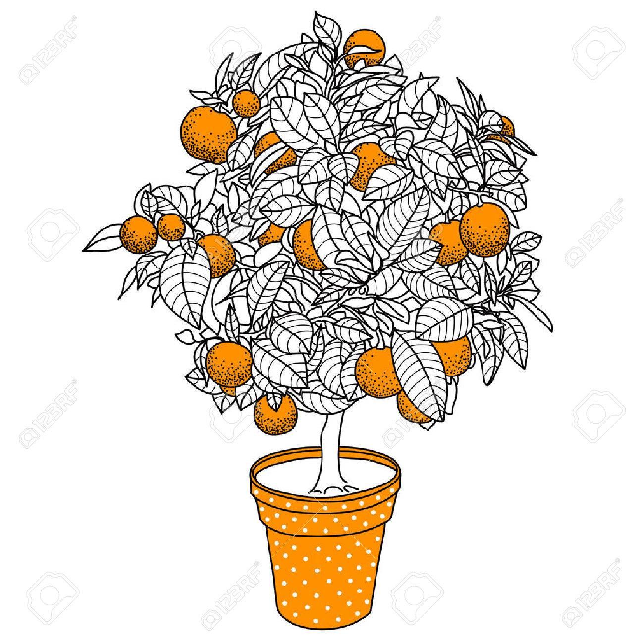 1300x1300 Citrus Tangerine, Orange Or Lemon Citrus Tree In A Pot In Contour