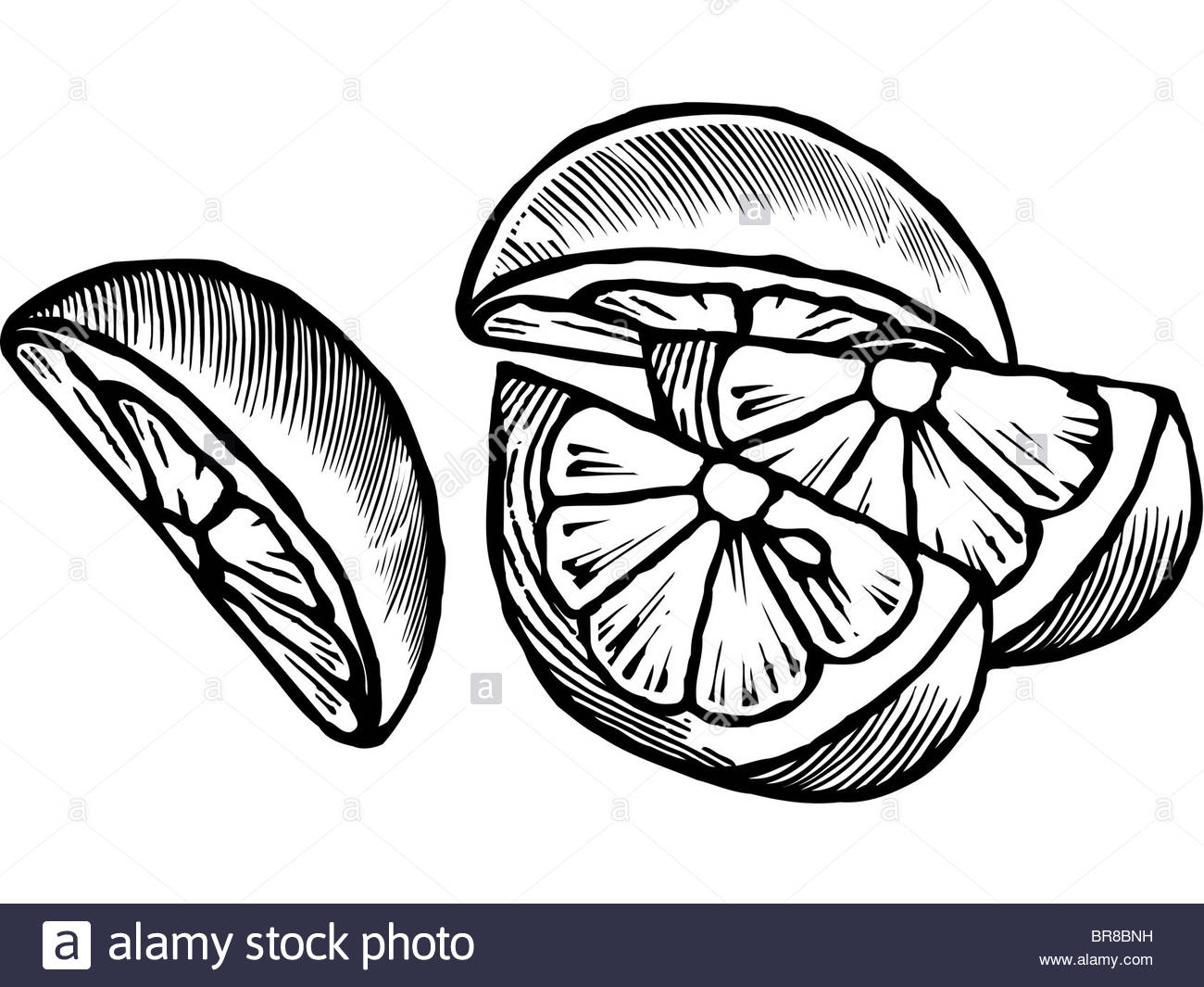 1300x1065 A Black And White Drawing Of Lemon Wedges Stock Photo 31532301