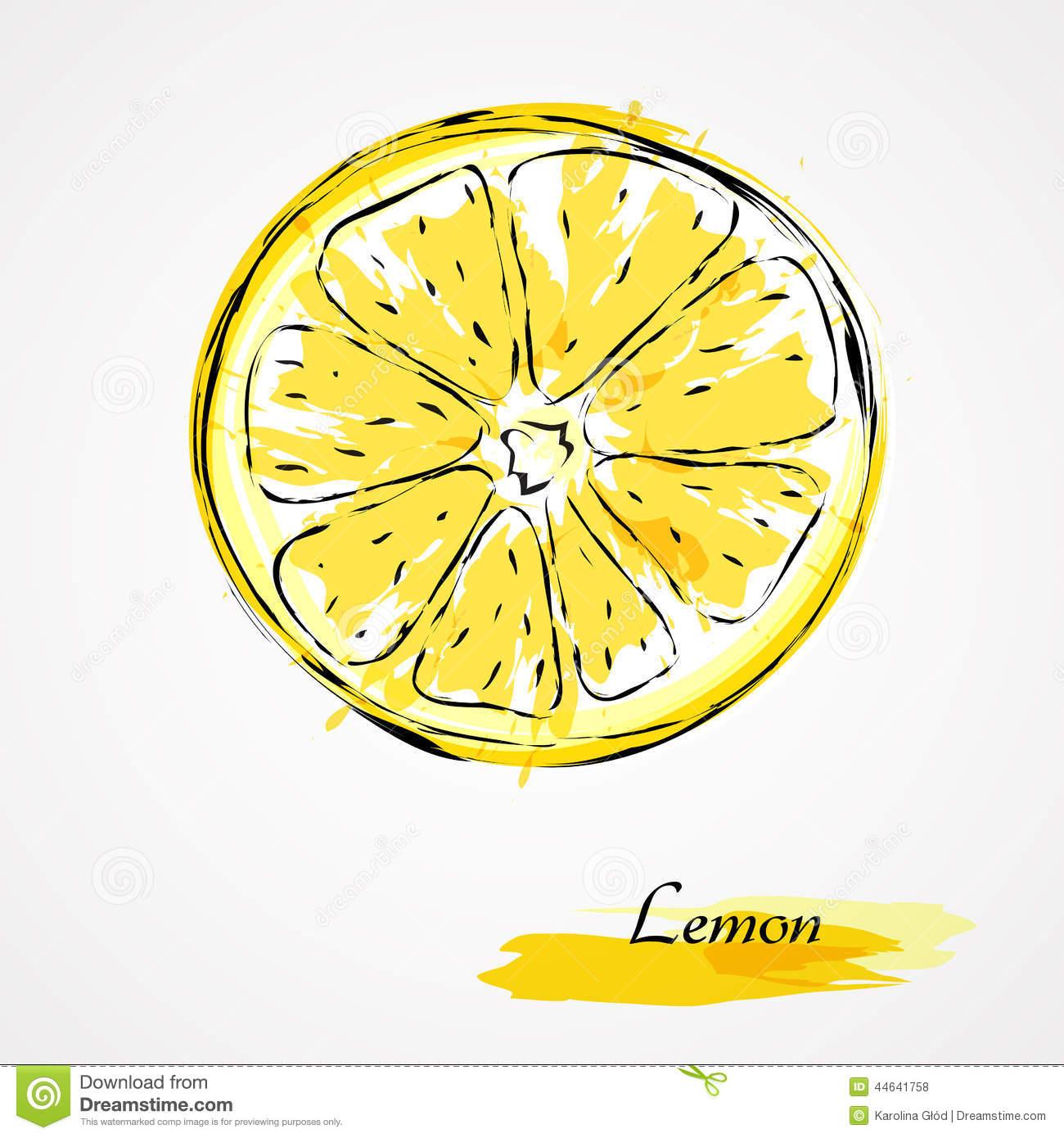 1300x1390 Lemon Slice Sketch