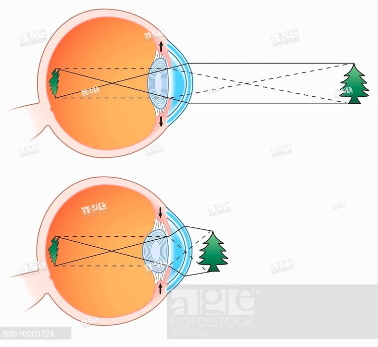 762x699 Lens, Drawing, Stock Photo, Picture And Rights Managed Image. Pic