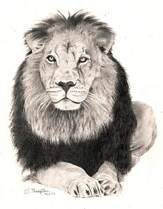 234x300 King Of The Jungle Drawings Fine Art America