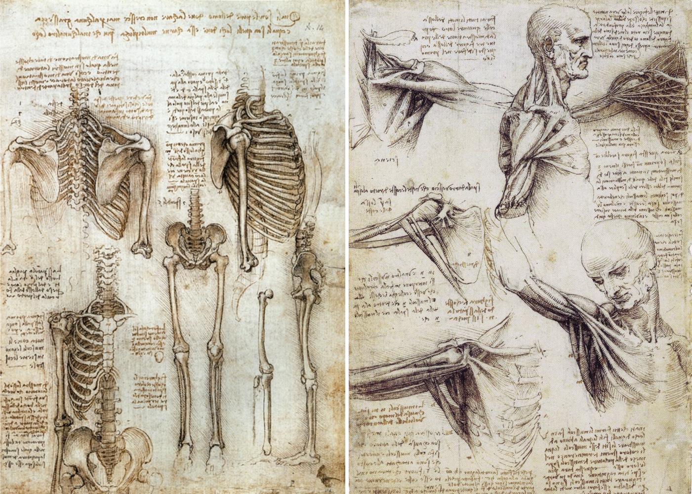 Erfreut Leonardo Da Vinci Zeichnungen Anatomie Ideen - Menschliche ...