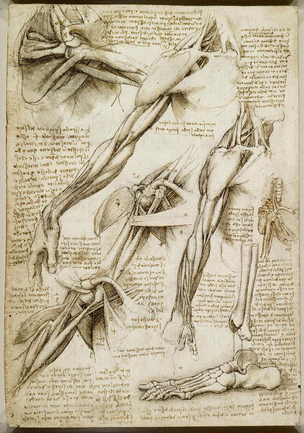 623x886 40 Most Famous Leonardo Da Vinci Paintings And Drawings Anatomy