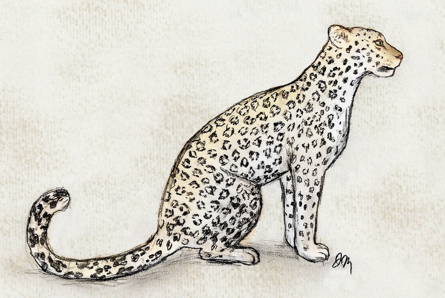 900x603 Arabian Leopard By Graphiteforlunch