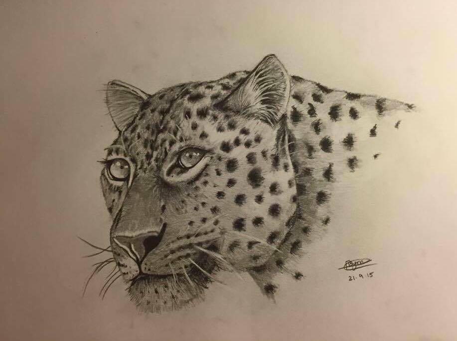Leopard Face Drawing At Getdrawings Com Free For