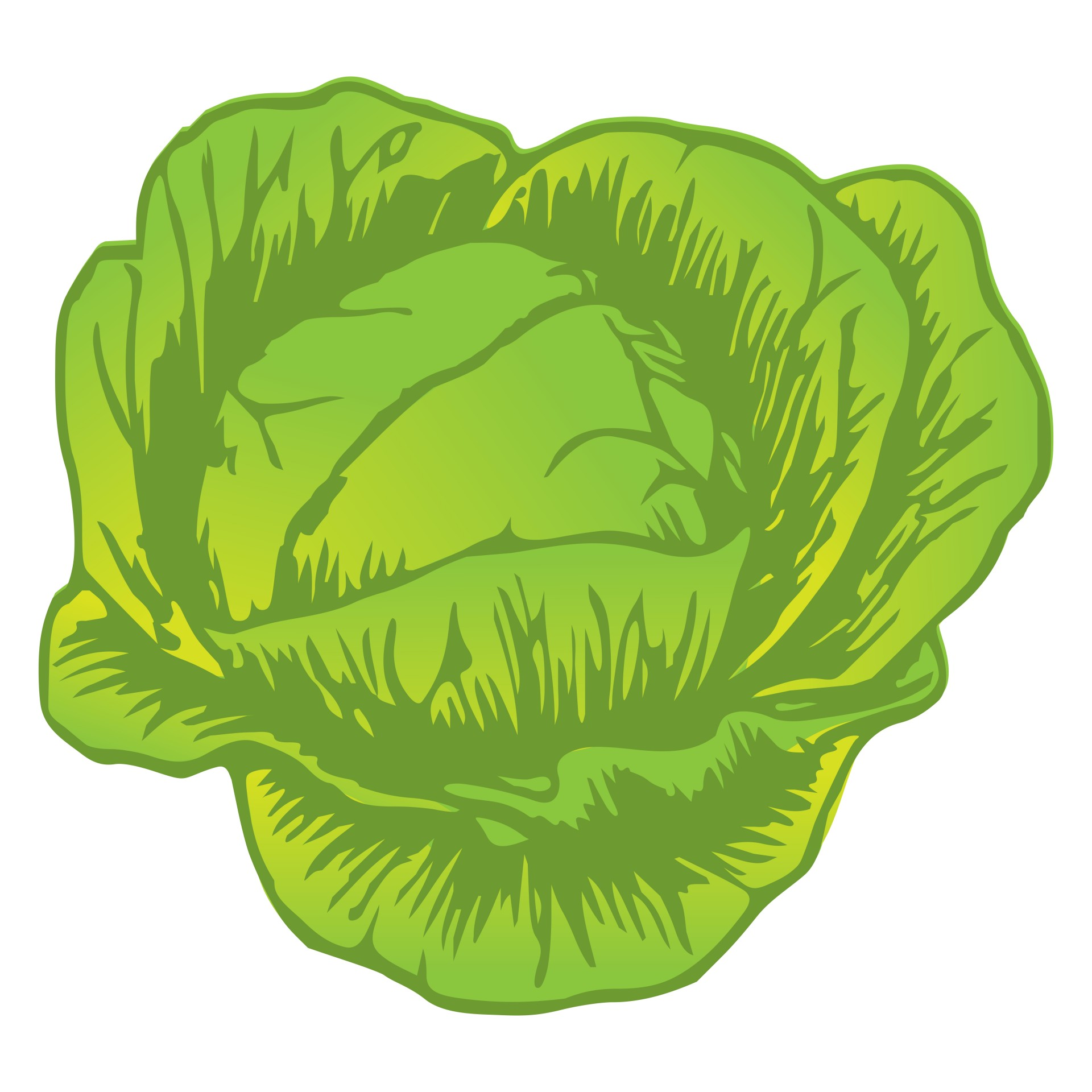1920x1920 Cabbage Drawing Free Stock Photo