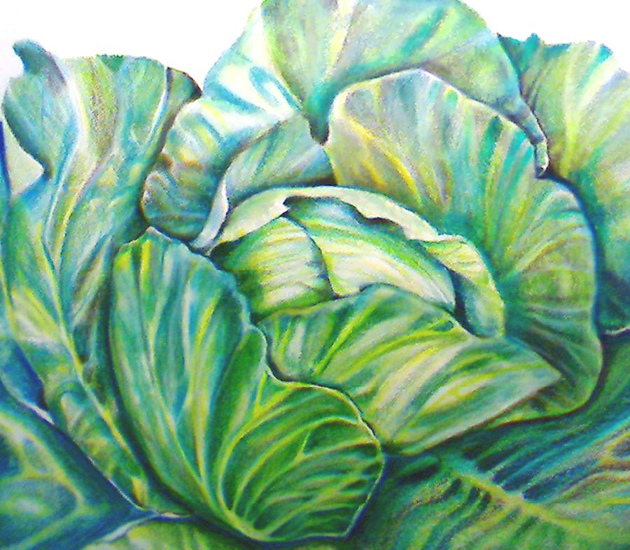 900x786 Lettuce Drawing By Cami Rodriguez