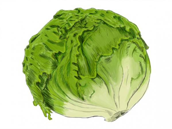 599x450 The Rise And Fall Of The Iceberg Lettuce The Millers Tale