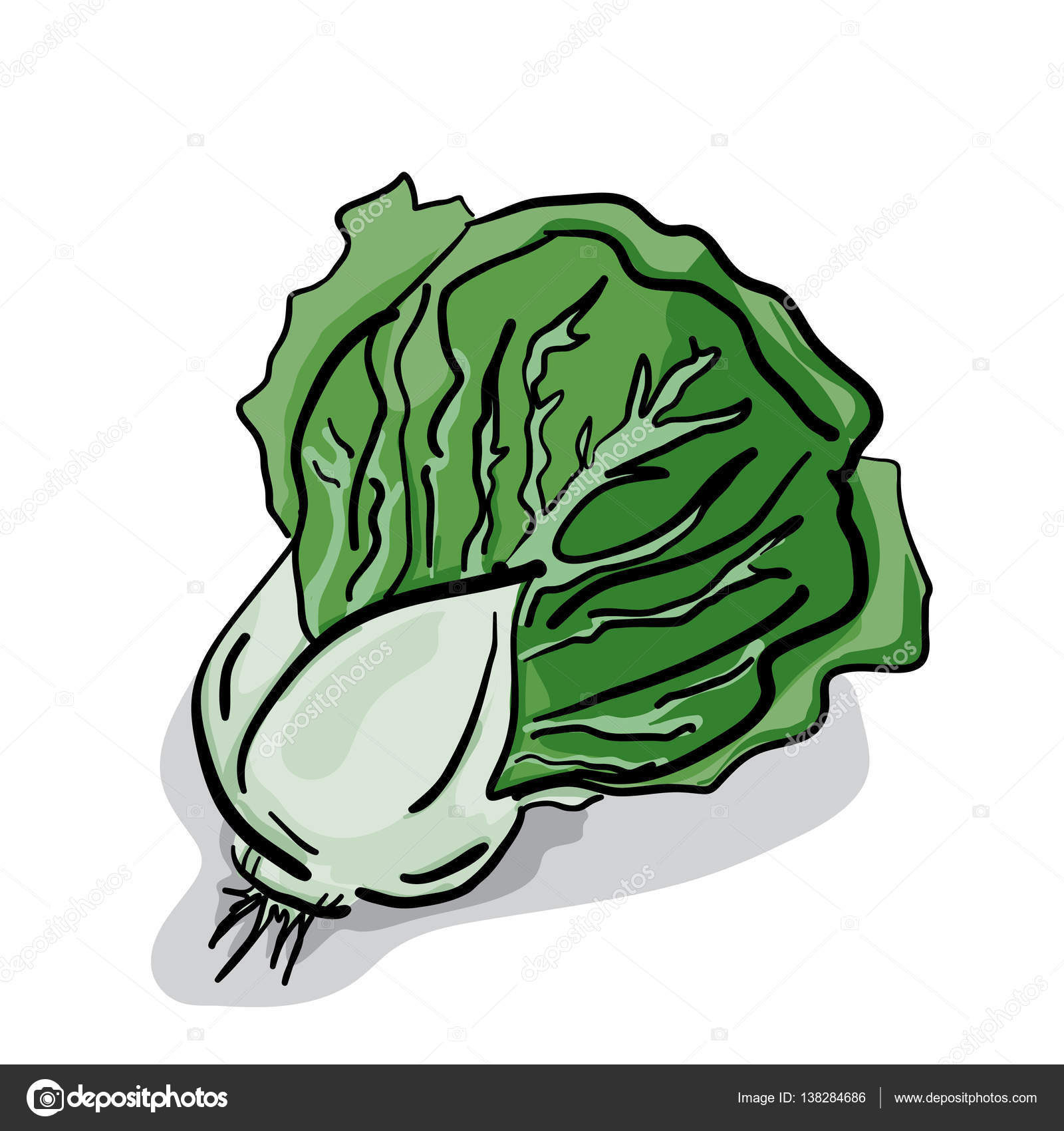 1600x1700 Vegetable Lettuce Drawing Stock Vector Foontntd