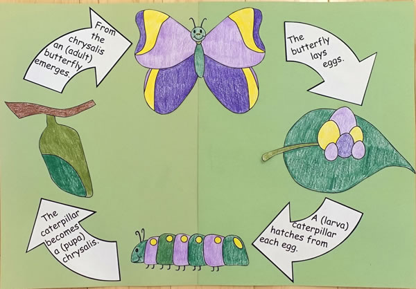 600x418 Butterfly Life Cycle Craft
