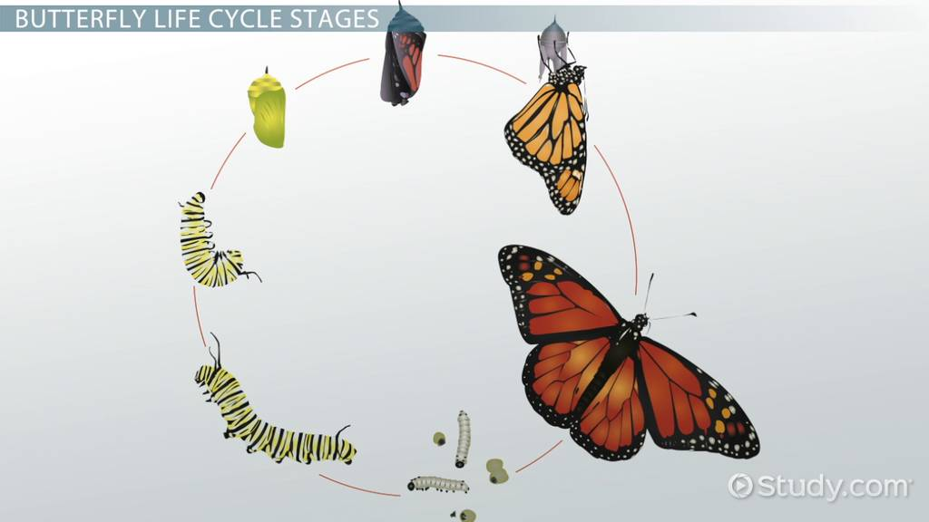 1024x576 Life Cycle Of A Butterfly Lesson For Kids