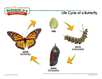 350x271 Science A Z Life Cycles Grades 3 4 Life Science Unit
